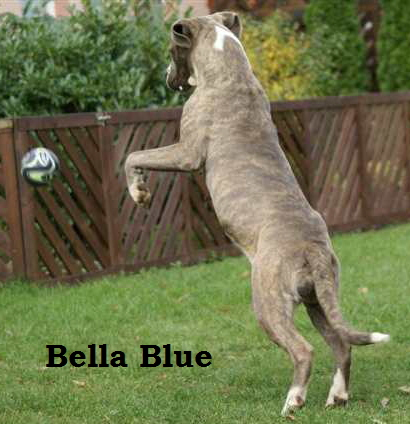 Bella Blue, (3)