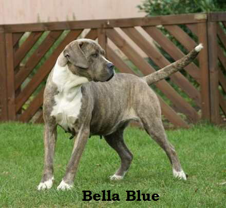 Bella Blue, (5)
